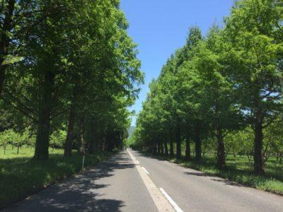 メタセコイア並木を求めてマキノ町へ!のんびりドライブに最適!